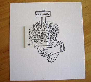 Petunias-flowers