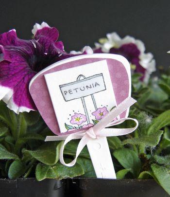 Petunia-close-up-plant-stak