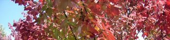 Fall-foliage-photo