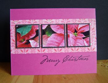 Photo-card-pink-poinsettia