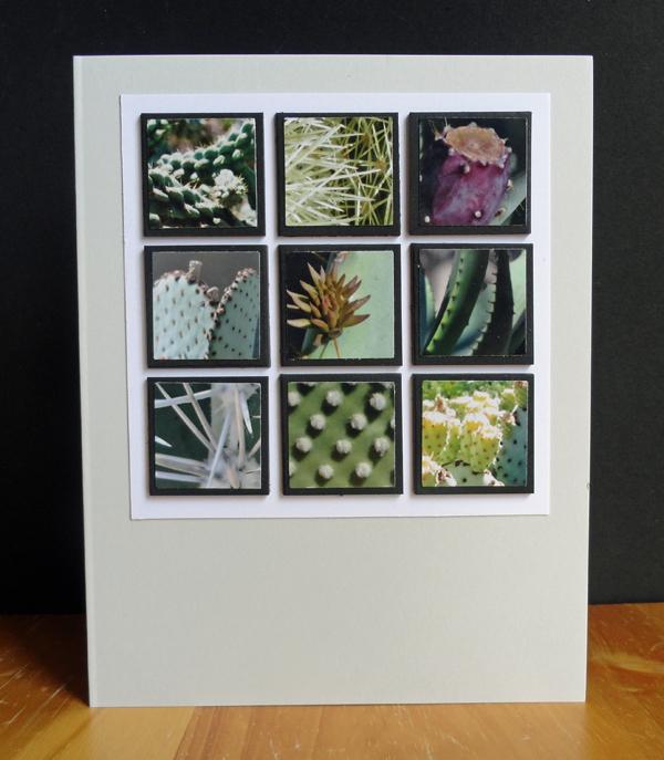 Cactus-4