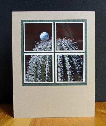Golf-ball-cactus