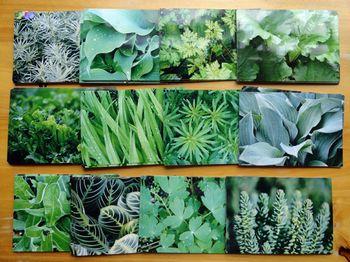 Sample-spring-green-photos