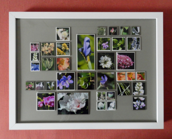 Garden-photo-collage